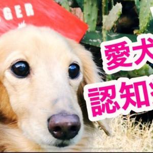 愛犬の認知症チェック&予防