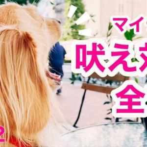愛犬マイティの吠え対策&飼い主の本音②