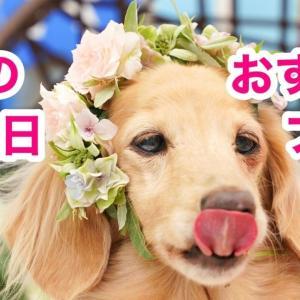 愛犬のお誕生日企画おすすめプラン【祝】リオ16歳!