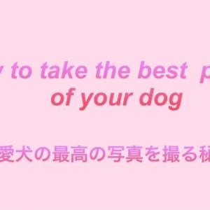 愛犬の最高な写真を撮る秘訣