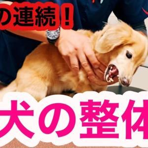 初めての犬の整体で驚きの連続!【シニア犬ケア】