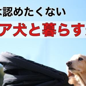 シニア犬と暮らす恐怖