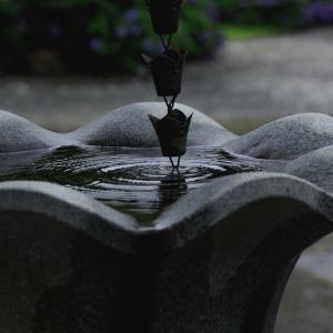 雨上がりのお寺   #3