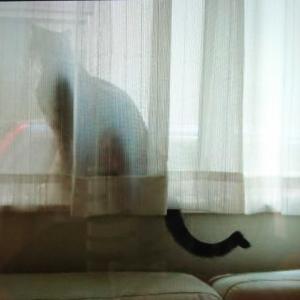 カギしっぽのルルと猫をしょってるロロ