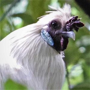 この鳥は何?・緊急!質問投稿、どなたか分かりますか