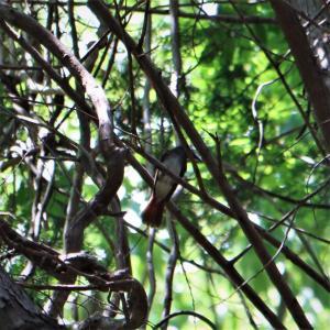 ある夏日の林道散策で五目撮り・Mモード、FocusRingで。