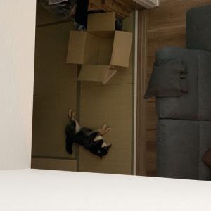 実家で遊んで帰った日の夜は朝まで1階で寝る大豆