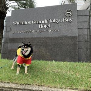 【シェラトングランデ東京ベイ】夢の国へ!愛犬とディズニー旅行にいってきました