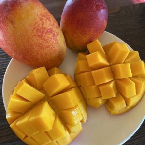 宮古島「大野果樹園」直売の家庭用マンゴーが、今年も美味い!、安い♩