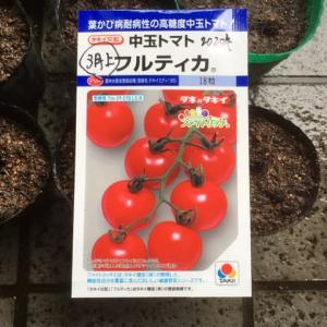 トマトを播種したYO(^^♪