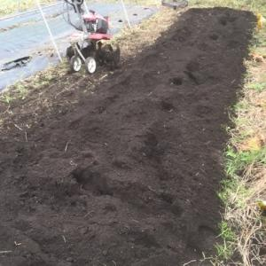 ほうれん草を播種しました!(&玉ねぎ畝作り)