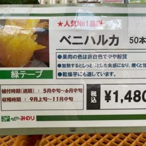 サツマイモを植え付けました(^^)/