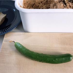 家庭菜園の野菜をぬか漬けに