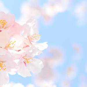 桜が咲きました!!