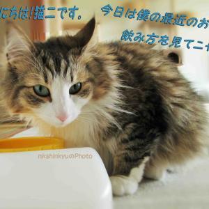 猫二君のお水飲み