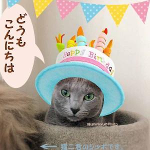 猫一君の誕生日