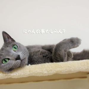 ヤンキー ツーニャンによる 猫タワー騒音問題
