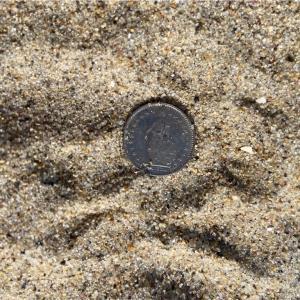 トレジャーハント:分かった人はすごい!希少価値の高い銀貨発見!