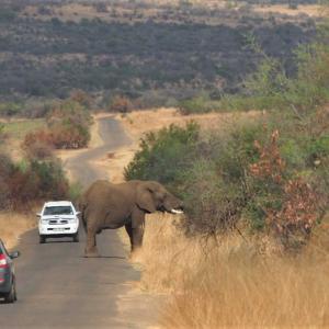 ピラネスバーグ国立公園 手軽にサファリが楽しめる ~南アフリカ~