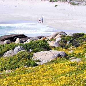 花巡り 海岸線と花畑のコラボ @ウエストコースト国立公園 その③/3 ~南アフリカ~