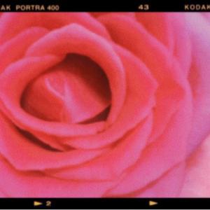 薔薇の弁財天