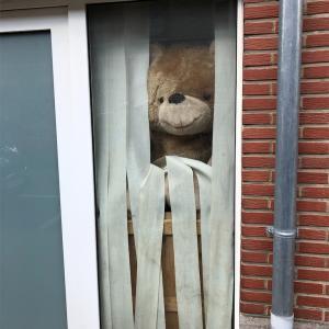 今日はみんなでクマがりだ!~窓際のくまを探せ!~