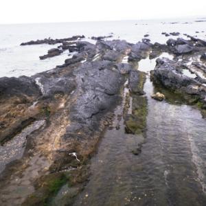 三浦半島『秘密のデカメバリングポイント』新規開拓のススメ