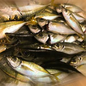 神奈川県『釣り解禁』釣るならコレだ!2020初夏のショア&オフショア爆釣予報★TOP3★