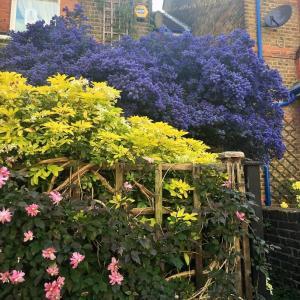 Webお花見(写真でお花見) 第63会場    チャーリーレポート@ロンドン
