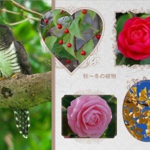 おはなしのタネNo.18 秋の夜長 植物の難読漢字に挑戦! その2