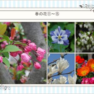 おはなしのタネ No.30 春の植物 難読漢字