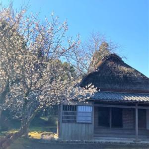 おはなしのタネNo.29 梅と桜と合わせて観れば~~♪♪