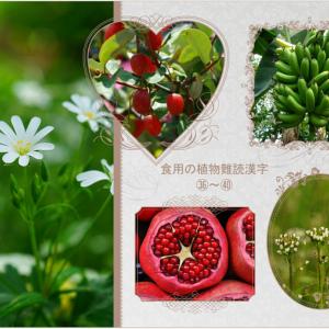 おはなしのタネ No.31 食用の植物難読漢字表記