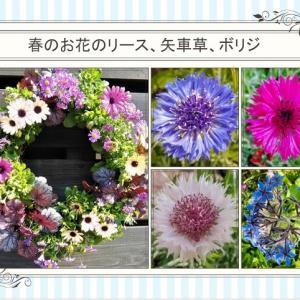 おはなしのタネNo.36 定例会のタネから矢車草が開花!