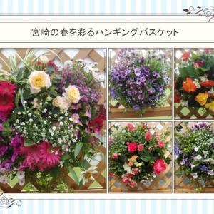 おはなしのタネNo.40 宮崎の春を彩るハンギングバスケット展