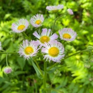 おはなしのタネNo.39 椿山の野の花たち♬