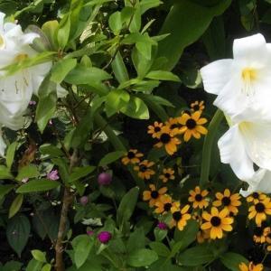 おはなしのタネNo.46 晩夏を彩る花たち