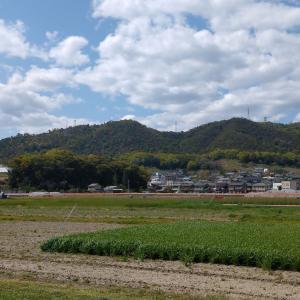 蔵王山マラニック