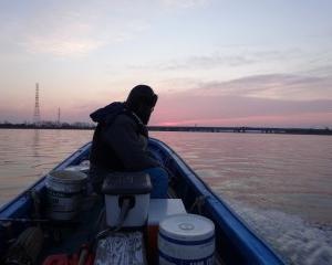 名古屋港、天然ワカメ情報