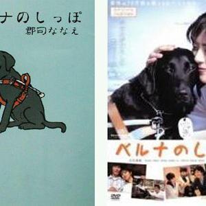 【映画】盲導犬について考える『ベルナのしっぽ』