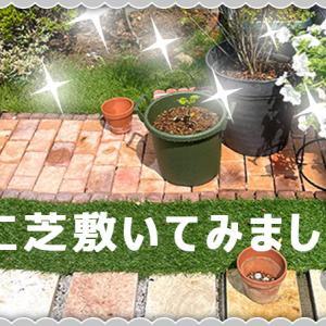 【庭づくり】敷くだけレンガと人工芝を使ってみました【芝】