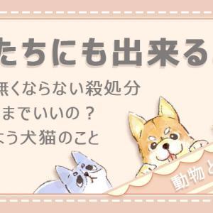 【犬猫】Panasonicジアイーノ×sippo 保護犬猫応援プロジェクト