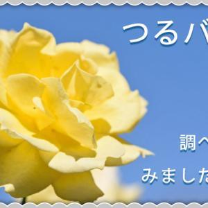 【花】だいぶ枝が伸びてきたつるゴールドバニーの特徴を調べてみました【ツルバラ】