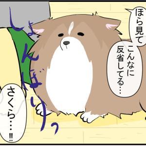 飼い主の失態を反省する犬