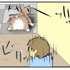 人と犬のライアーゲーム