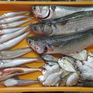 釣りに出る前にお魚GET(^_^)v
