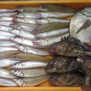 今朝の釣りはカサゴぱらDay