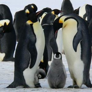 南米の最果てでペンギンを捕獲する旅