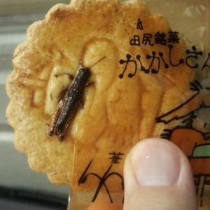異物混入!?ではないいなご入りクッキー -Locust cookies-