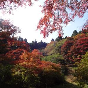 私が宮城で一番オススメする紅葉スポット松島の「扇谷」を紹介